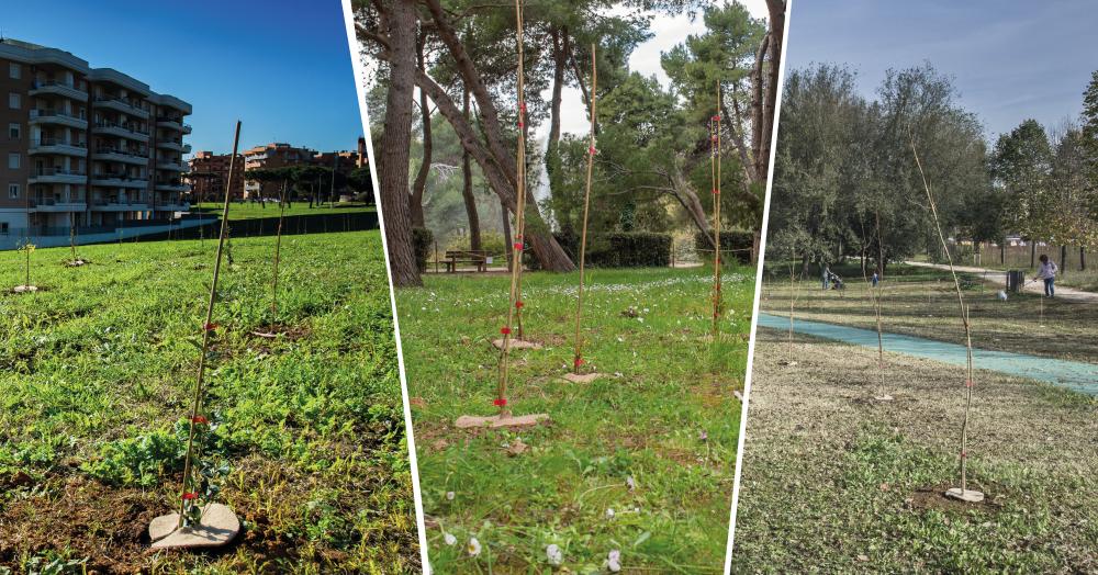 Roma 20 giugno: Valorizzazione del patrimonio forestale pubblico attraverso la Campagna Mosaico Verde. Gli Enti pubblici si raccontano